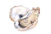 Abalonen